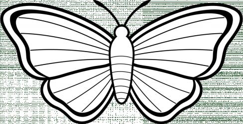 clipart moth clip butterfly butterflies drawings illustration google