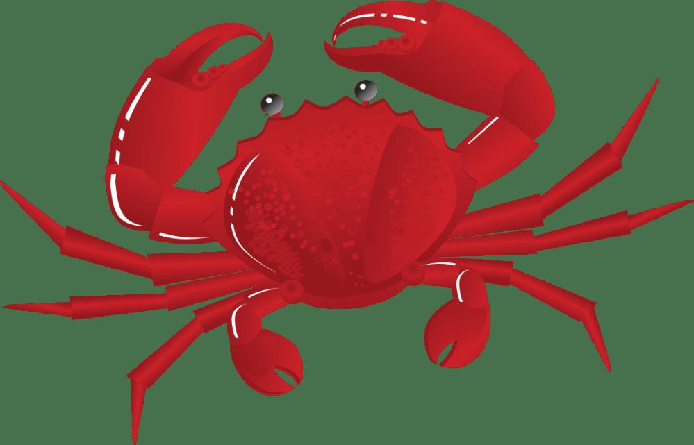 medium resolution of crab clipart