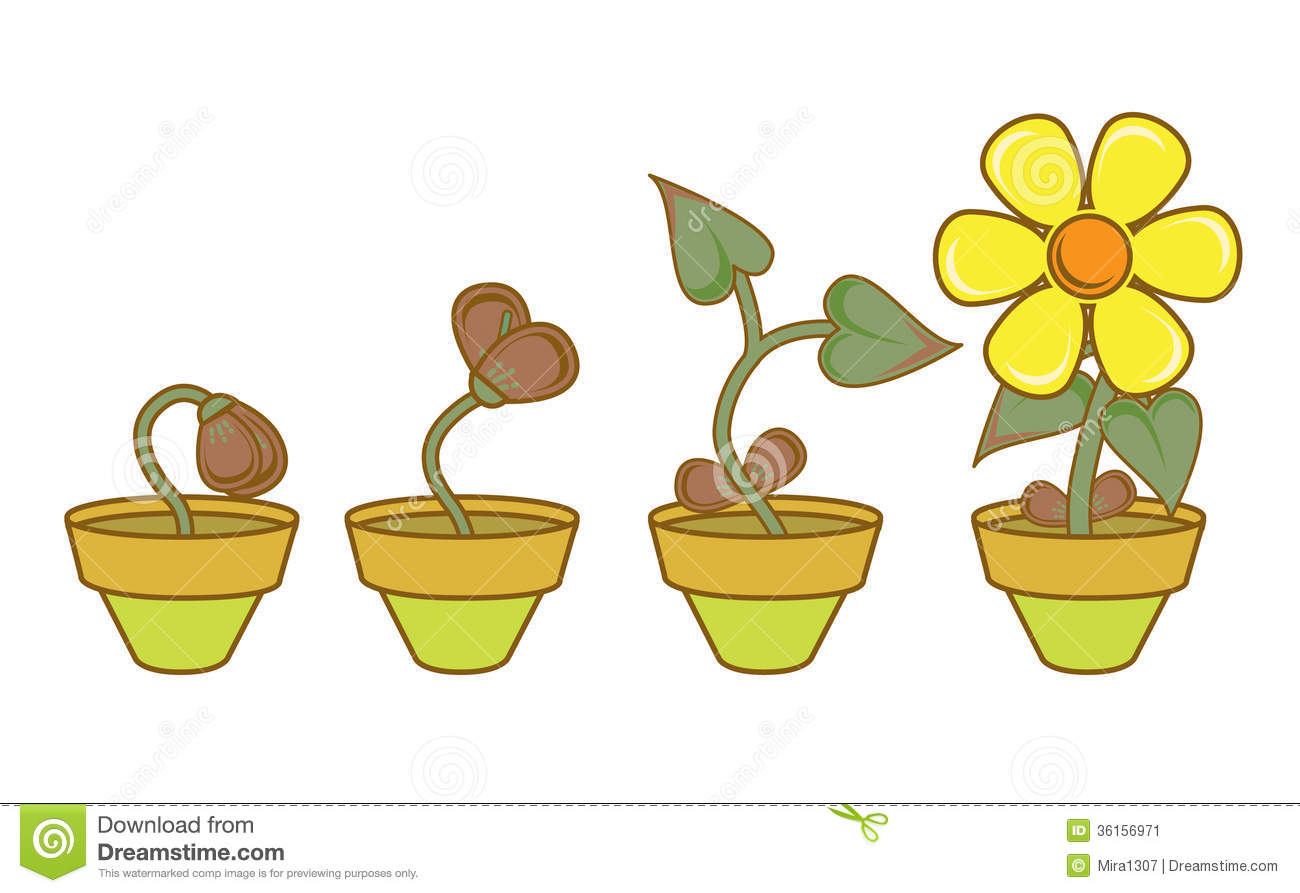 Plant Growth And Development Worksheet