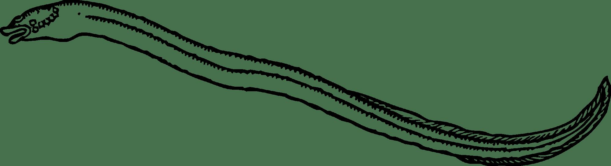 hight resolution of eel clip art