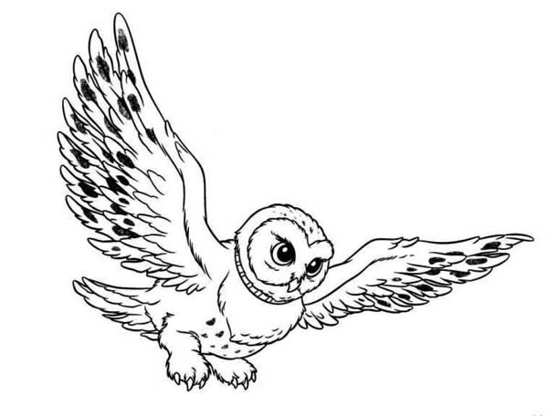 20 Black Line Owl Coloring Page Ideas And Designs