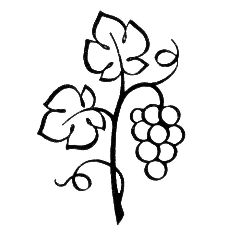 hight resolution of grape clipart