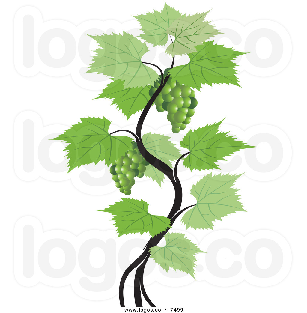 hight resolution of grapevine clipart