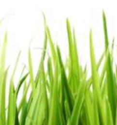 grass clipart [ 3000 x 600 Pixel ]