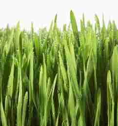 grass clipart [ 1024 x 1024 Pixel ]