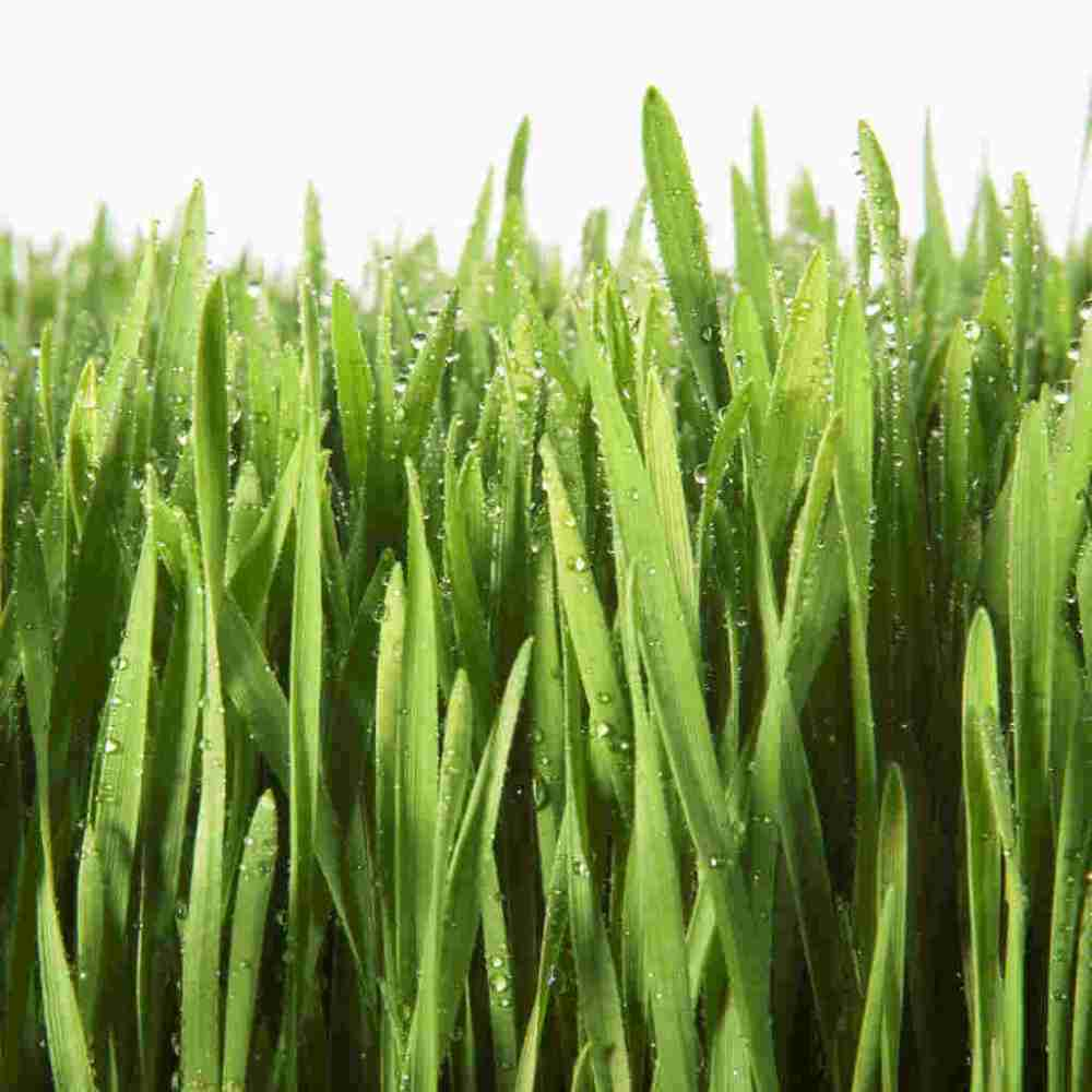 medium resolution of grass clipart