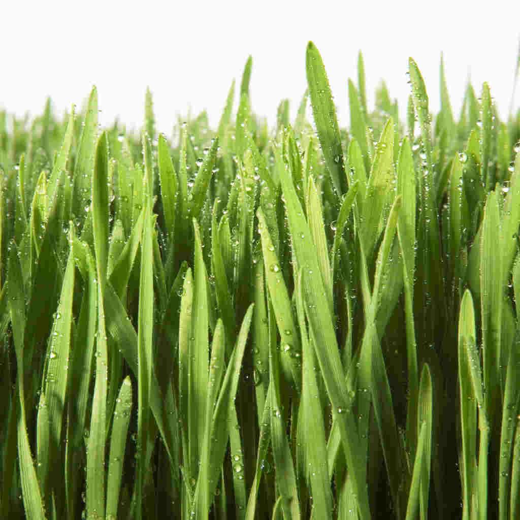 hight resolution of grass clipart