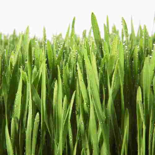 small resolution of grass clipart