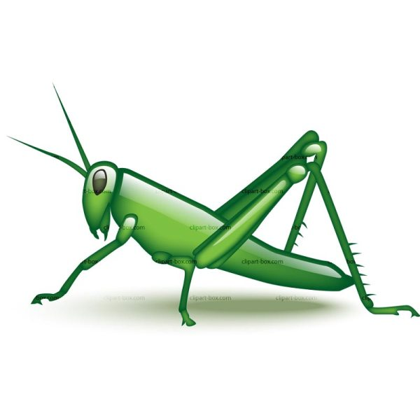 grasshopper clipart black and white