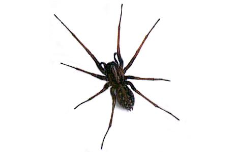 halloween spider clipart clipart