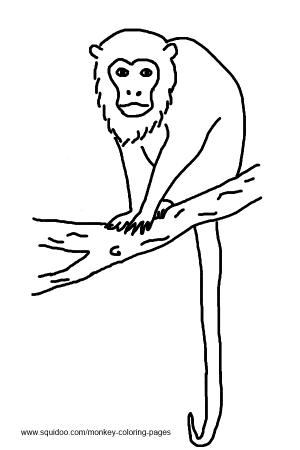 Realistic Monkey Black And White