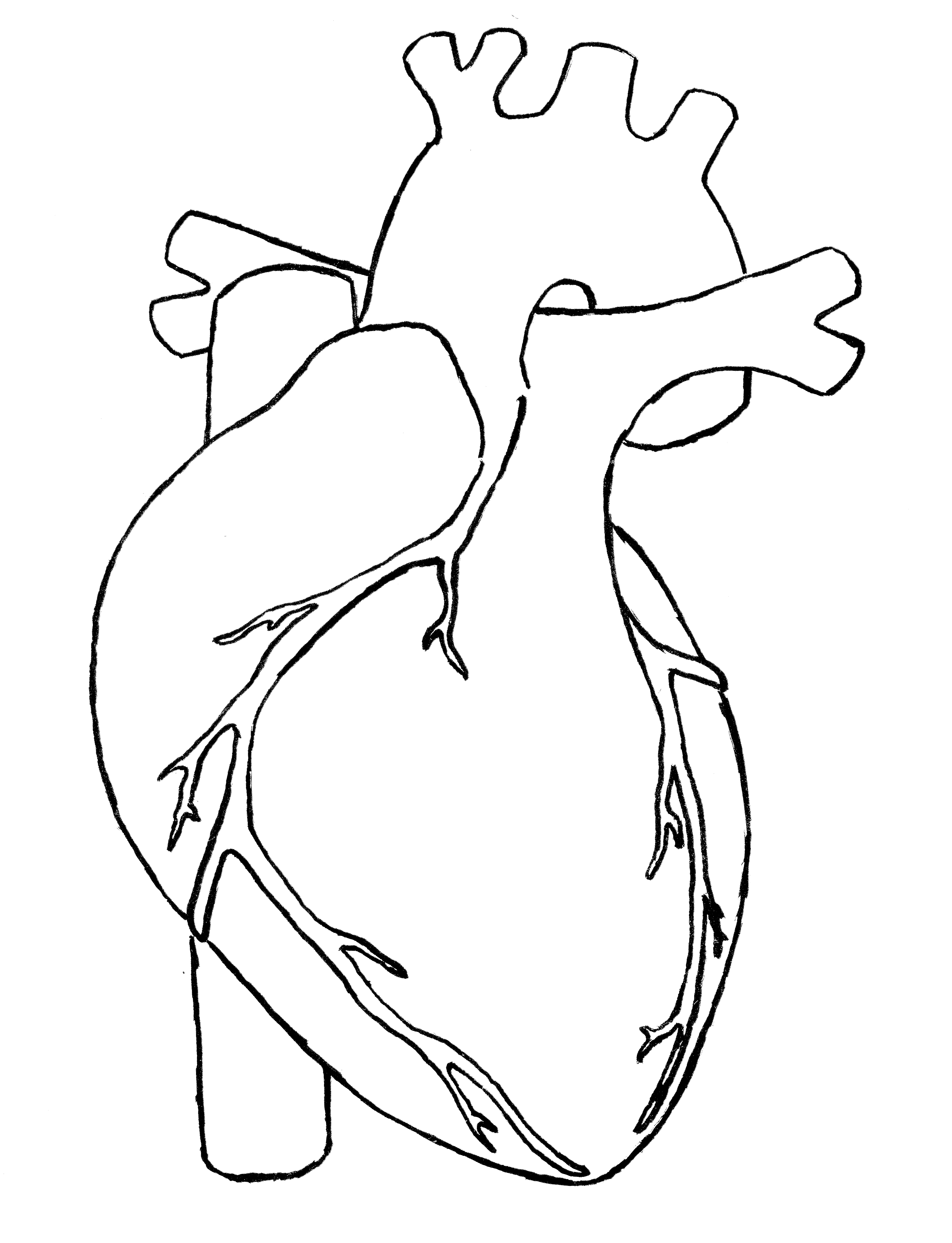Realistic Human Heart Outline
