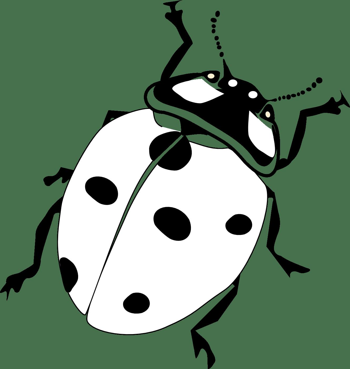 Ladybug Clipart Black And White Clipart Panda