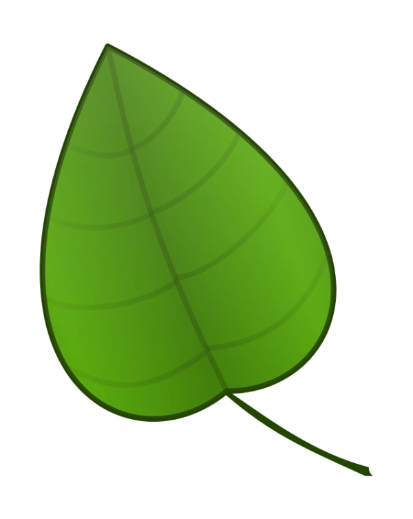 green pumpkin leaf clipart