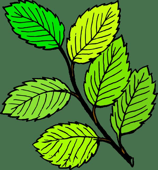 leaf clip art free clipart panda