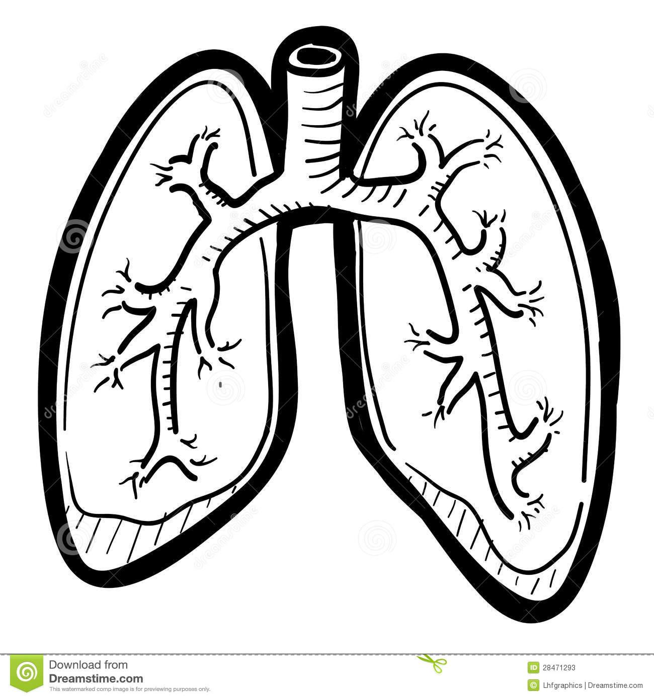 Human Lungs Sketch Stock Clipart Panda