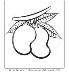 mango clipart drawing illustration manggo line clipartpanda royalty panda clipartmag perera lal cliparts terms