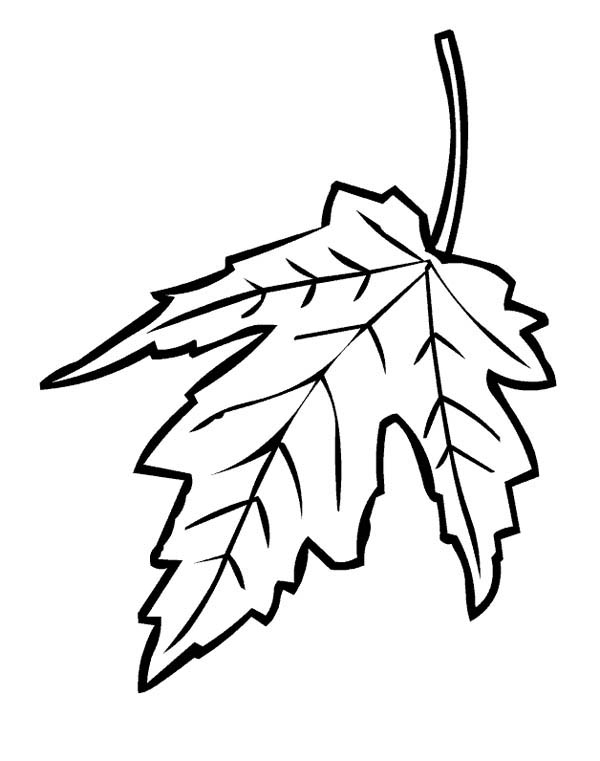 +maple Colouring Pages