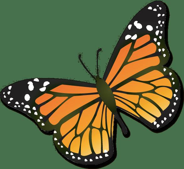 monarch caterpillar clipart