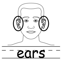 ears clip clipart neck body parts outline coloring words cliparts ear human cartoon clipartpanda abcteach basic library labeled unlabeled listening