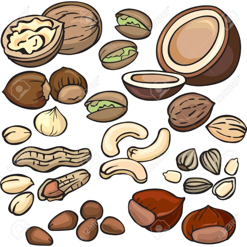 Image result for clip art nuts