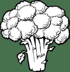 vegetable clipart clip garden parsley vector vegetables