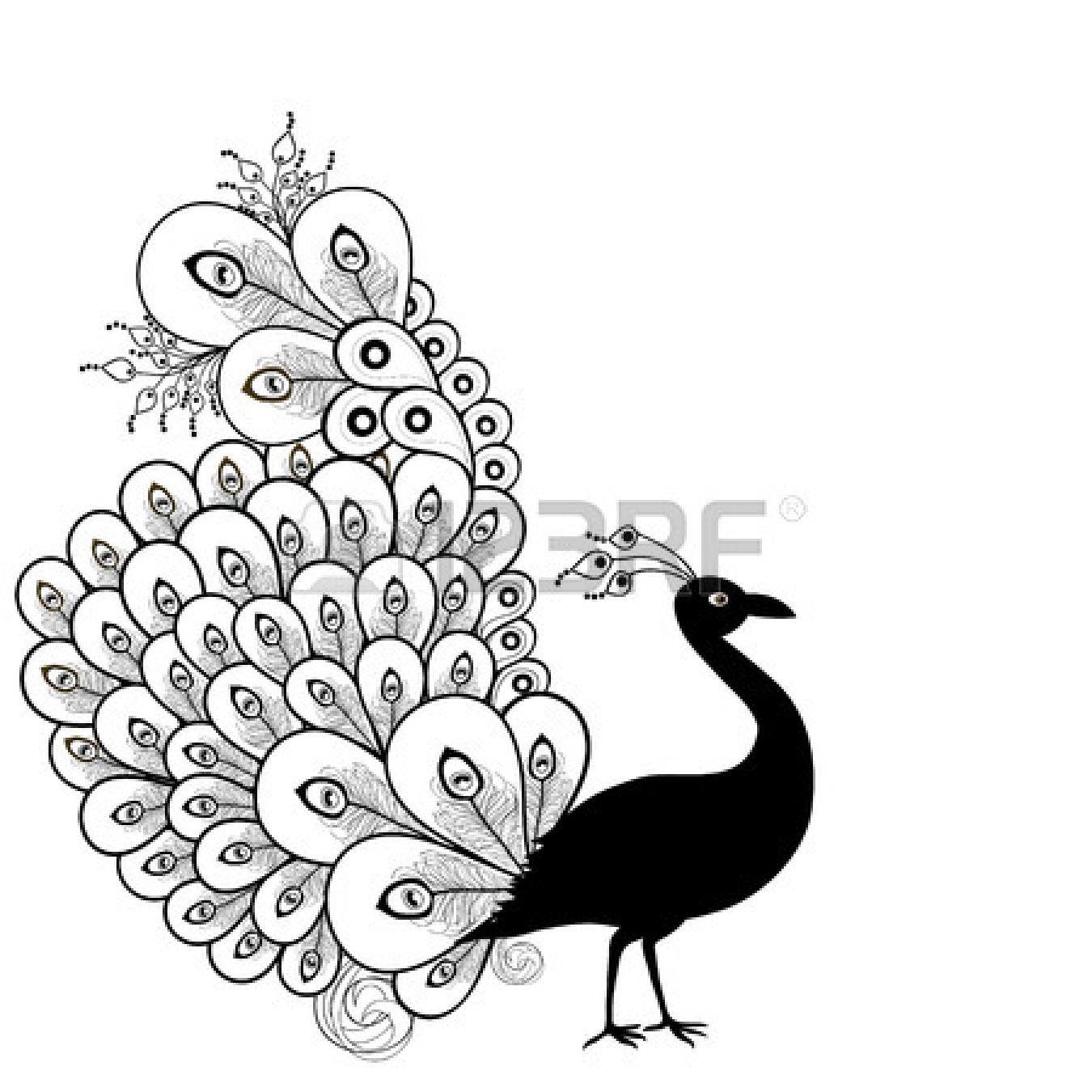 Peacock Art Black And White