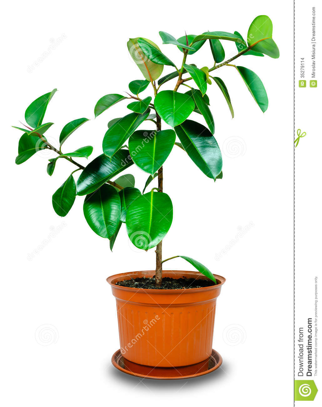 hight resolution of potted plant clipart