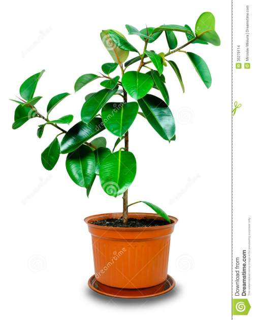 small resolution of potted plant clipart