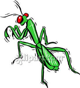 praying mantis clip art clipart