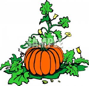 pumpkin vine clipart