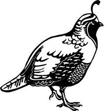 quail clipart clip animal drawing bird vector drawings tattoo fotosearch print animals graphics quails birds wood eps illustration sketch woodbadge