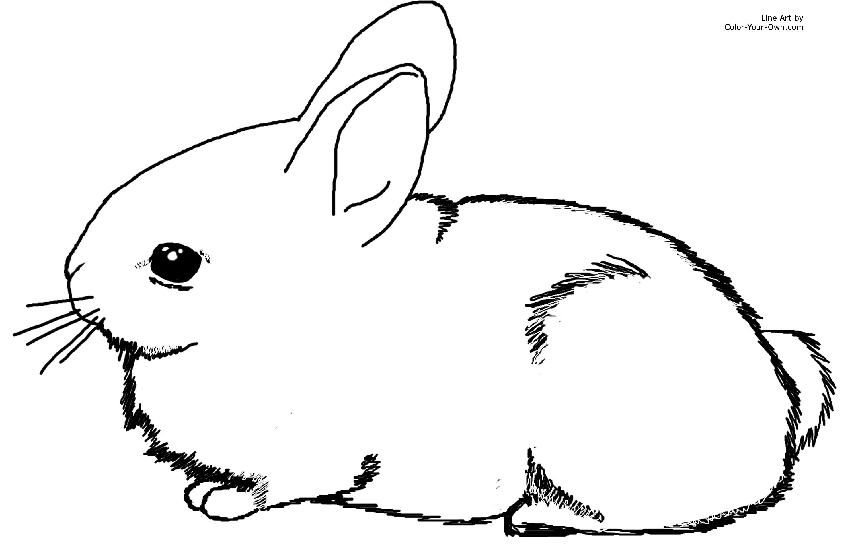 Rabbit Coloring Page Clipart Panda