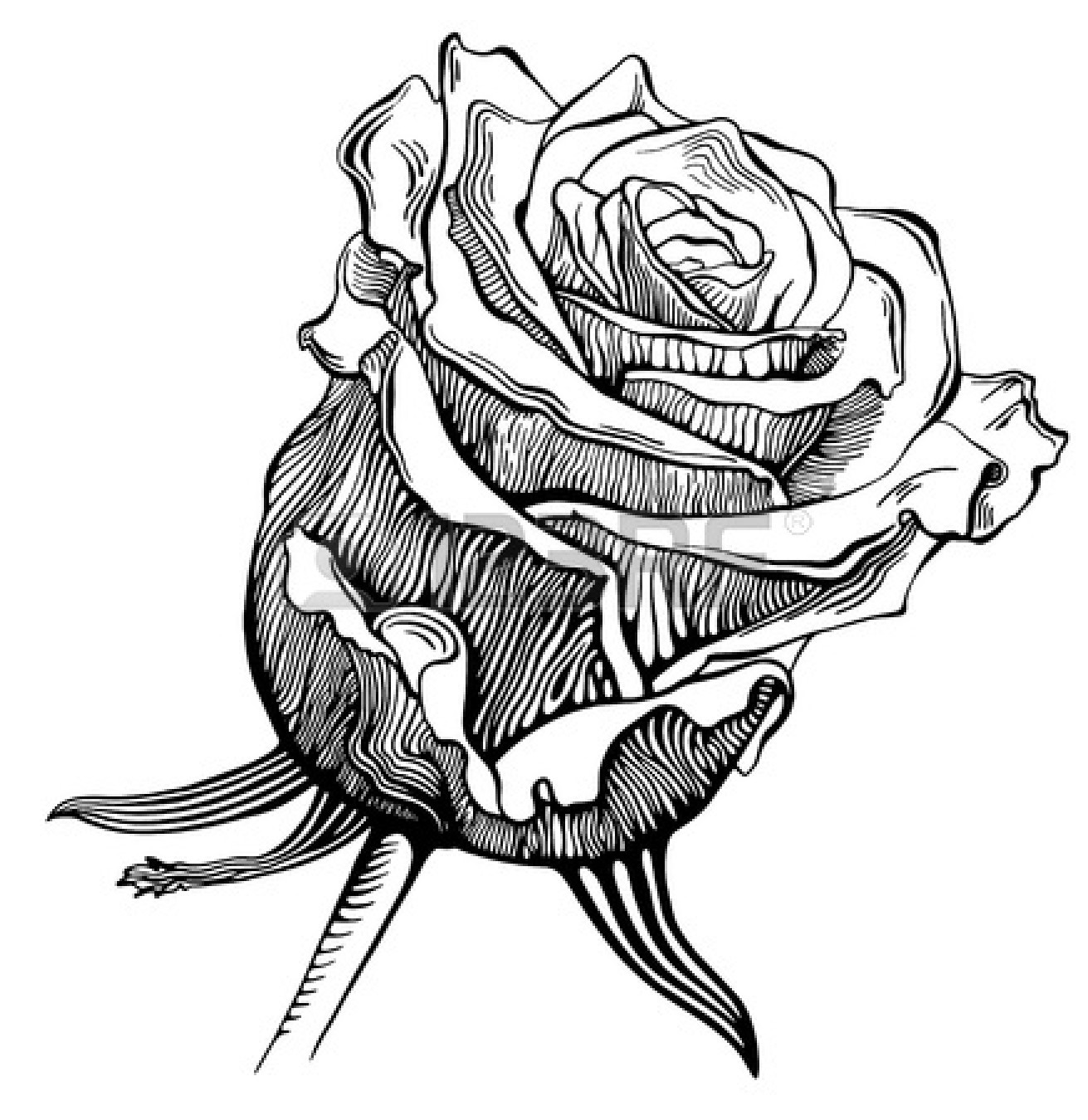 Rose Black And White Outline Clipart Panda