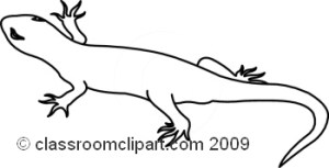 Salamander Clipart Black And White