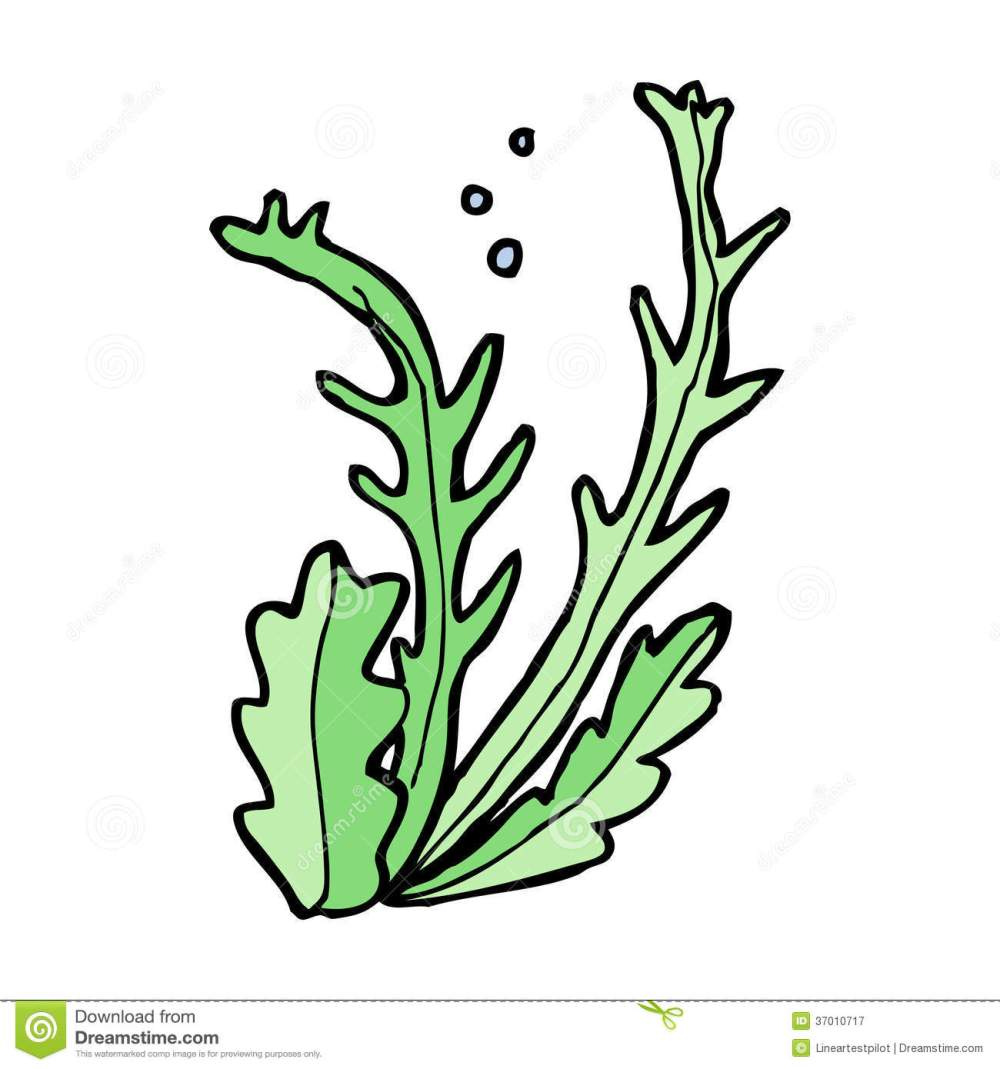 medium resolution of seaweed clipart