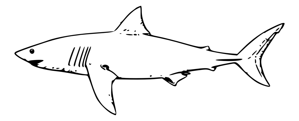medium resolution of shark clipart black and white