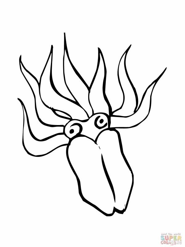 squid coloring # 65