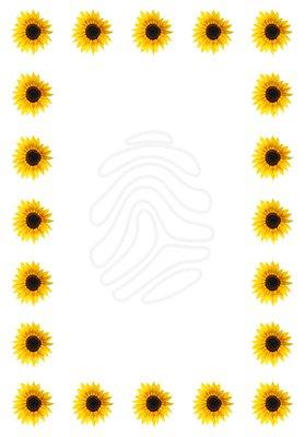 clip art sunflower border clipart