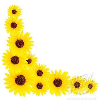 sunflower border design clipart