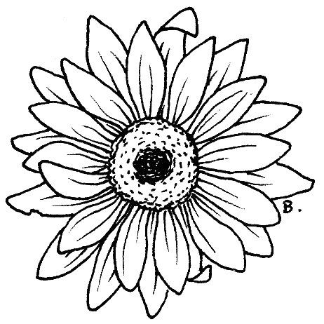sunflower drawing clipart panda