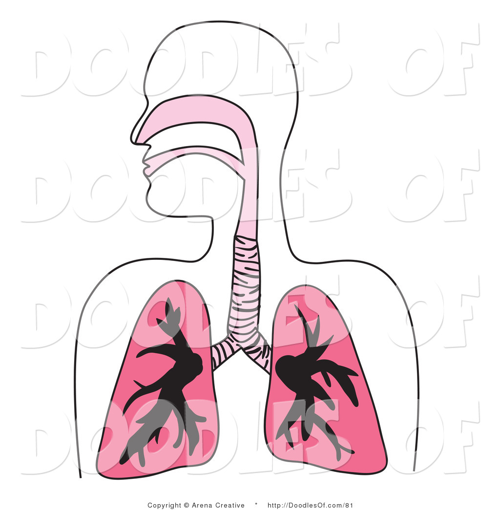 Simple Diagram Of Human Lungs System Clipart Clipart Panda Free Clipart Images
