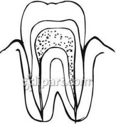 tooth teeth clipart diagram clip royalty panda advertisement