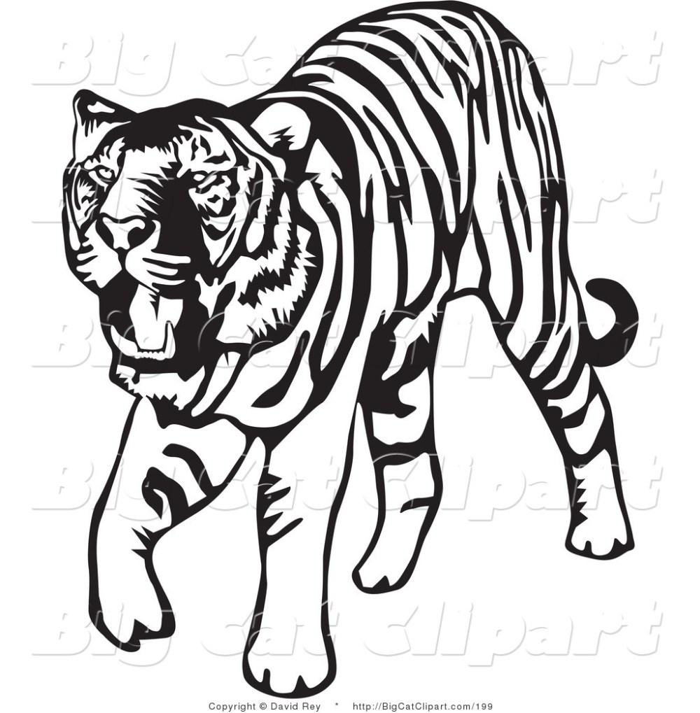 medium resolution of tiger clip art