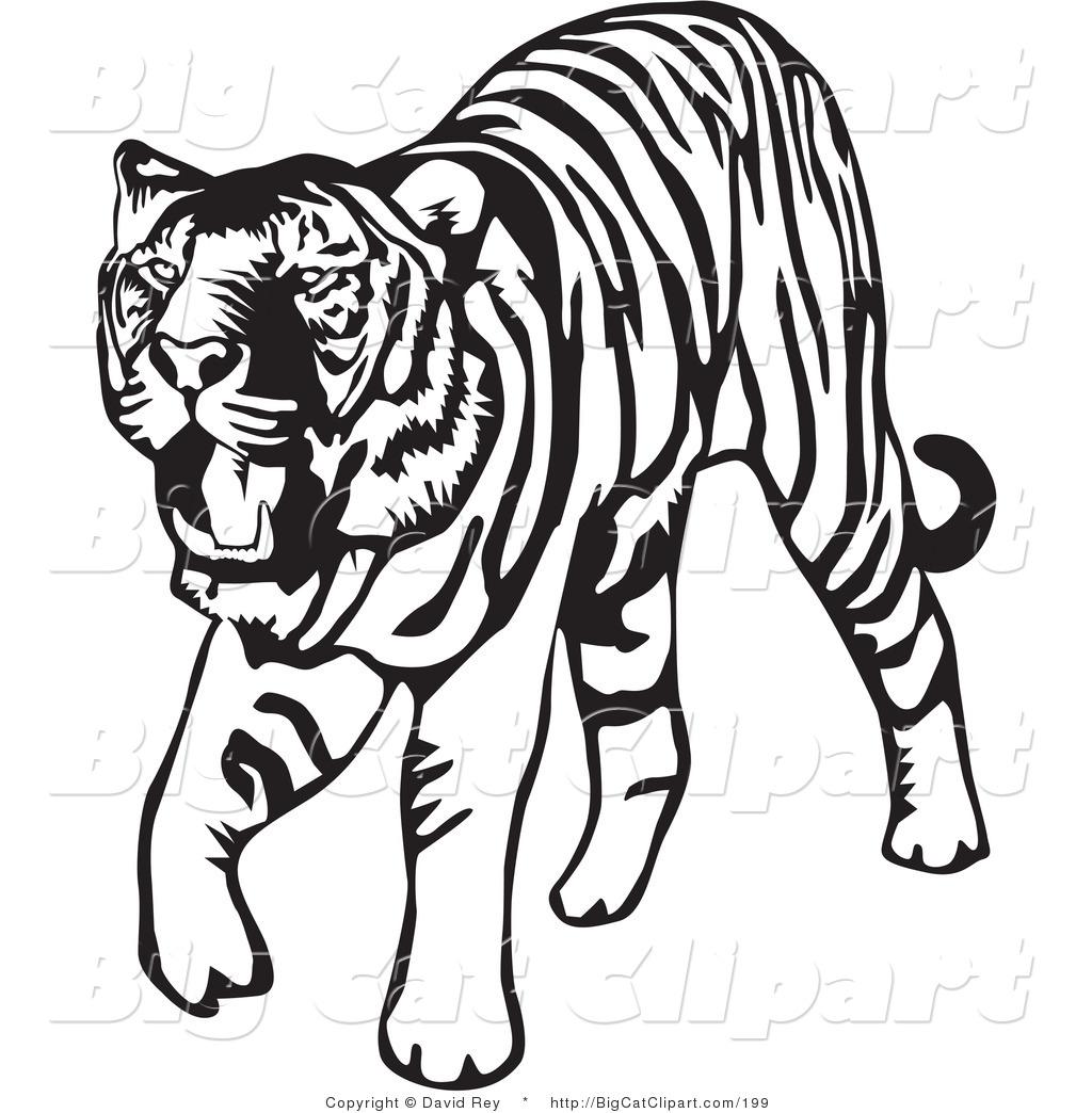 hight resolution of tiger clip art