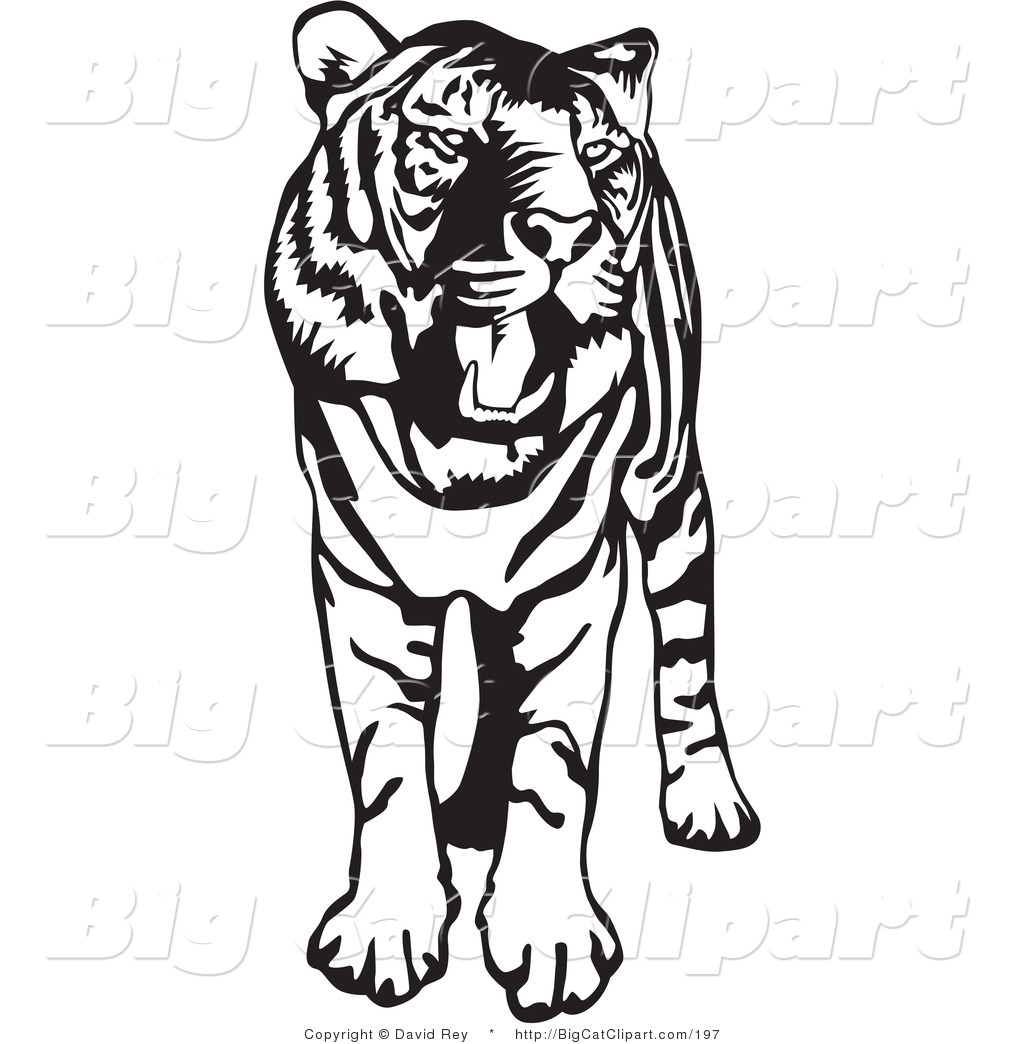 Lioness Clipart Black And White Clipart Panda