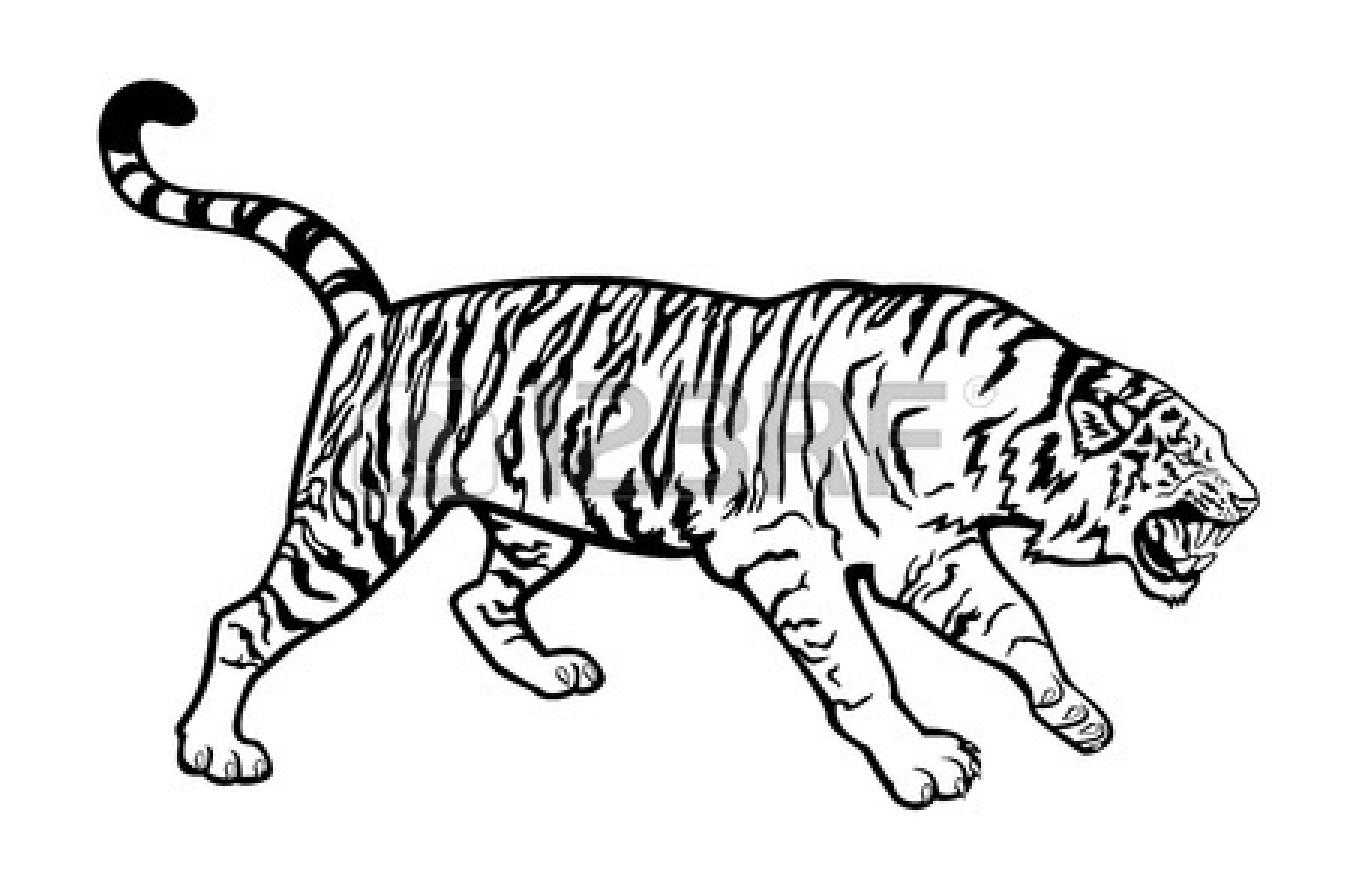 Tiger Eyes Drawing Clipart Panda