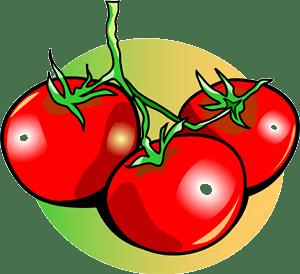 tomato clipart panda