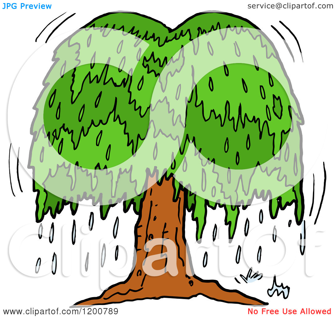 hight resolution of cartoon of a weeping willow clipart panda free clipart images rh clipartpanda com oak tree weeping willow leaf