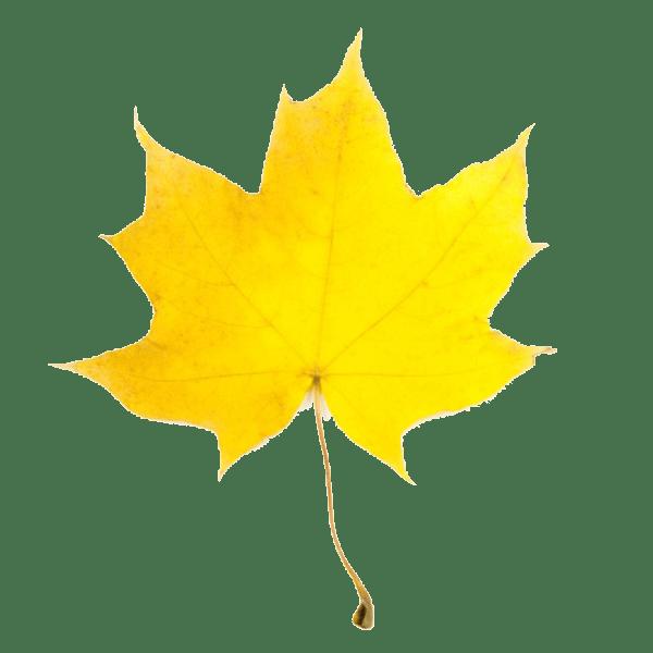 fall leaf clipart panda